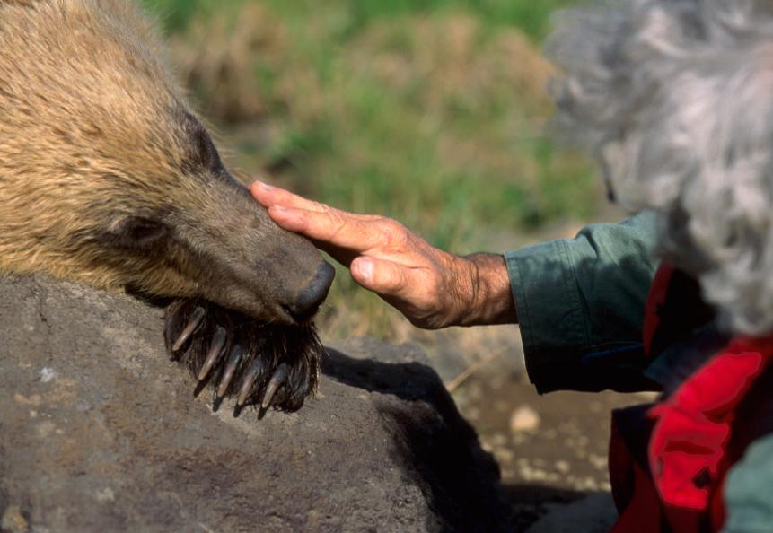 Animal Being Internship